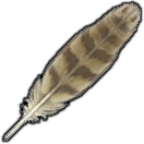 Dodo Feather
